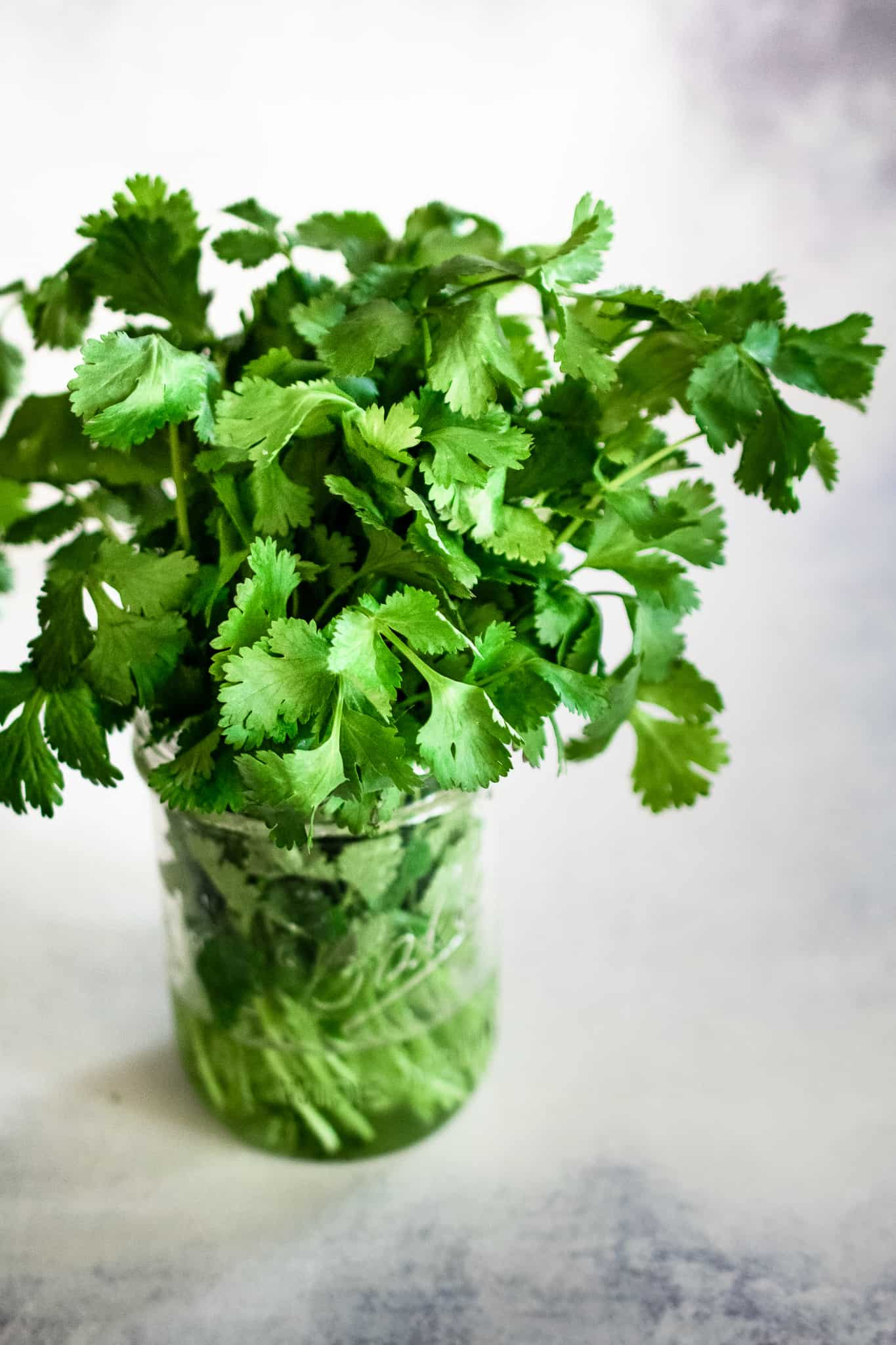 one bunch of fresh cilantro in a mason jar with one inch of water