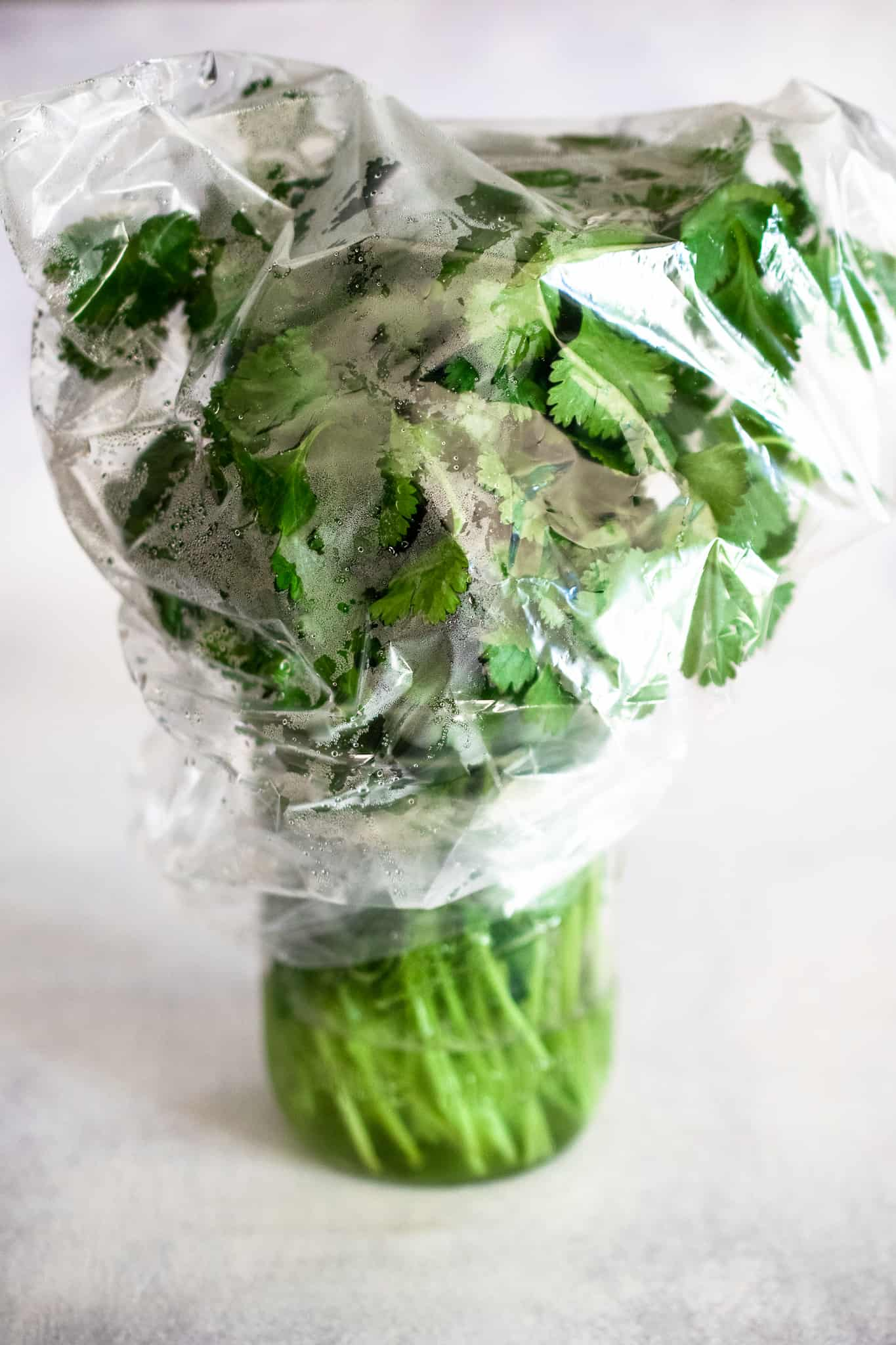 mason jar of fresh cilantro with an inch of water covered loosely with a clear plastic bag