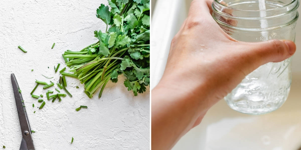 Trimming ends off cilantro stems and filling a glass of water.