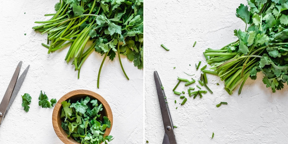 Trimming the ends of cilantro stems with a pair of scissors.