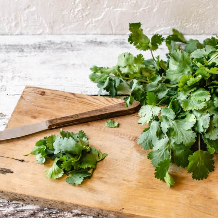 Fresh cilantro stems and leaves on a wooden cutting board with a knife.